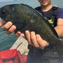 阪神応援ブログ 時々 釣り日記