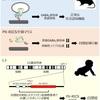 東京大学が、自閉症の原因となる遺伝子を特定【発達障害】