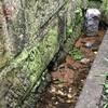 初台川の湧水リベンジ