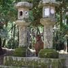 日本旅行記:奈良でひたすら鹿と戯れるショートトリップ!奈良から関西空港までの行き方解説もあるよ