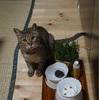 久々に猫草を食べたらゲロゲロなさった件