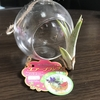 土が要らないエアープランツ『ジュライくん』の成長日記【1ヶ月目】