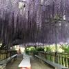 福島市上野寺の藤の花をみてきました〜〜(^▽^)/