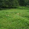 カボチャとスイカの野生栽培