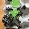 爬虫類の活餌について。クロメガコオロギ購入。