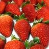 甘酸っぱくておいしい大粒のいちごが届きました〜徳島県上板町ふるさと納税〜
