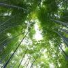 竹林が素晴らしい!鎌倉「報国寺」で癒されてきた!!