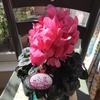 我が家にやってきた天使 -Pink-