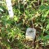 [三角点]★鷲別岬山(ウオカップ岳、二等三角点、点名:本台)標石