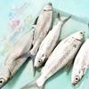 外国人も行ける!セブ島のローカル釣り堀で地元ピクニック【レンタルタックルあり・フィリピン魚釣り】