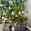 色鮮やかなスミレの花々の香る季節