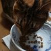 猫も食通になっていく