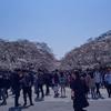 上野に桜を見に行きました...