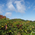 ◆'21/09/12 村山葉山・畑コースより③…小僧森~大つぼ石
