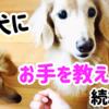 愛犬にお手を教える② 【しつけ】