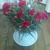Carnation in a pot = 400 yen ($3.92 €2.84)