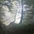 【禅語】霧の中を行けば覚えざるに衣湿る ~環境から受ける影響~