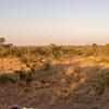 サファリ:Manyeleti Game Reserve(マンイェレティゲームリザーブ)