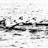 1982年:縄文の丸木舟で日本海を渡った先生方がいた