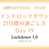 【ロックダウン記録】ロックダウン19日目 ~人懐っこい野良猫に再び遭遇した日~