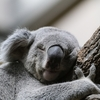 ひさしぶりにコアラのマーチを食べたら眉毛コアラがふたつ!