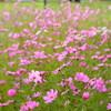 汚庭に花を咲かせよう。