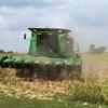 トウモロコシの収穫がスタート。大型マシーンで一気です。楽しそう。