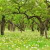 偕楽園の梅、ツツジ、タンポポ