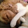 供血犬・供血猫の存在ってご存知ですか?