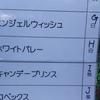 戸川公園のチューリップ植え付け隊