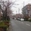 今日の1枚 ~芦屋市にて桜並木~