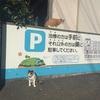 志賀島調査3回目