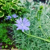 花まっさかりのお庭とハーブクッキング
