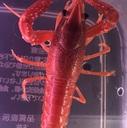 ザリガニ・甲殻類の世界