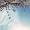 5/24 日曜日のZOOM陰ヨガ