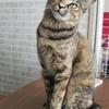猫付き合いの上手なハイジちゃん 【3/28里親会参加予定】