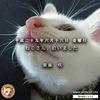 犬派の僕が猫と暮らす理由:紫藤咲・セルフコメンタリー Complete ① ~1つの命を拾うこと~
