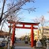 【鎌倉】鶴岡八幡宮段葛の桜は今週末が見頃(2018年3月27日)