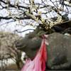 北野天満宮で梅を愛でる