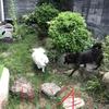 甲斐犬サン、仲良し姉妹➕長女⁈の巻〜( ᵒ̴̶̷᷄ д ᵒ̴̶̷᷅ )エェ〜、ナニソレ?