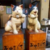 谷中霊園に猫は居るのか