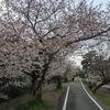 京都さくら散歩(西京極から嵐山)