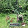 庭に新たに花壇を作ります!