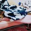これまでの寝具の変遷を振り返る。ベッド→ソファーベッド→?
