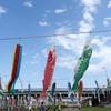 加茂市・加茂川を泳ぐ鯉のぼり2021(5/1)
