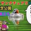0708【昭和記念公園バードサンクチュアリ行ってみたが・・・】ツバメ巣立ち、カイツブリ、カワセミ、ツミ、カルガモ親子など【今日撮り野鳥動画まとめ】身近な生き物語
