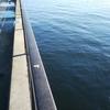 釣場調査 ファミリーフィッシング 秋の釣りとレジャー 吉良サンライズパーク (宮崎港)