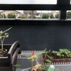 植木鉢のハーブ苗を株分けして植える/separate the herbs from little plants/直接把买来的各种薄荷苗分株繁殖