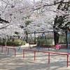 多摩川桜百景 -9. 洗足池公園-