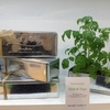 (SOLD OUT) ハーブ&ベジ栽培セット [Home Garden] ¥1,500